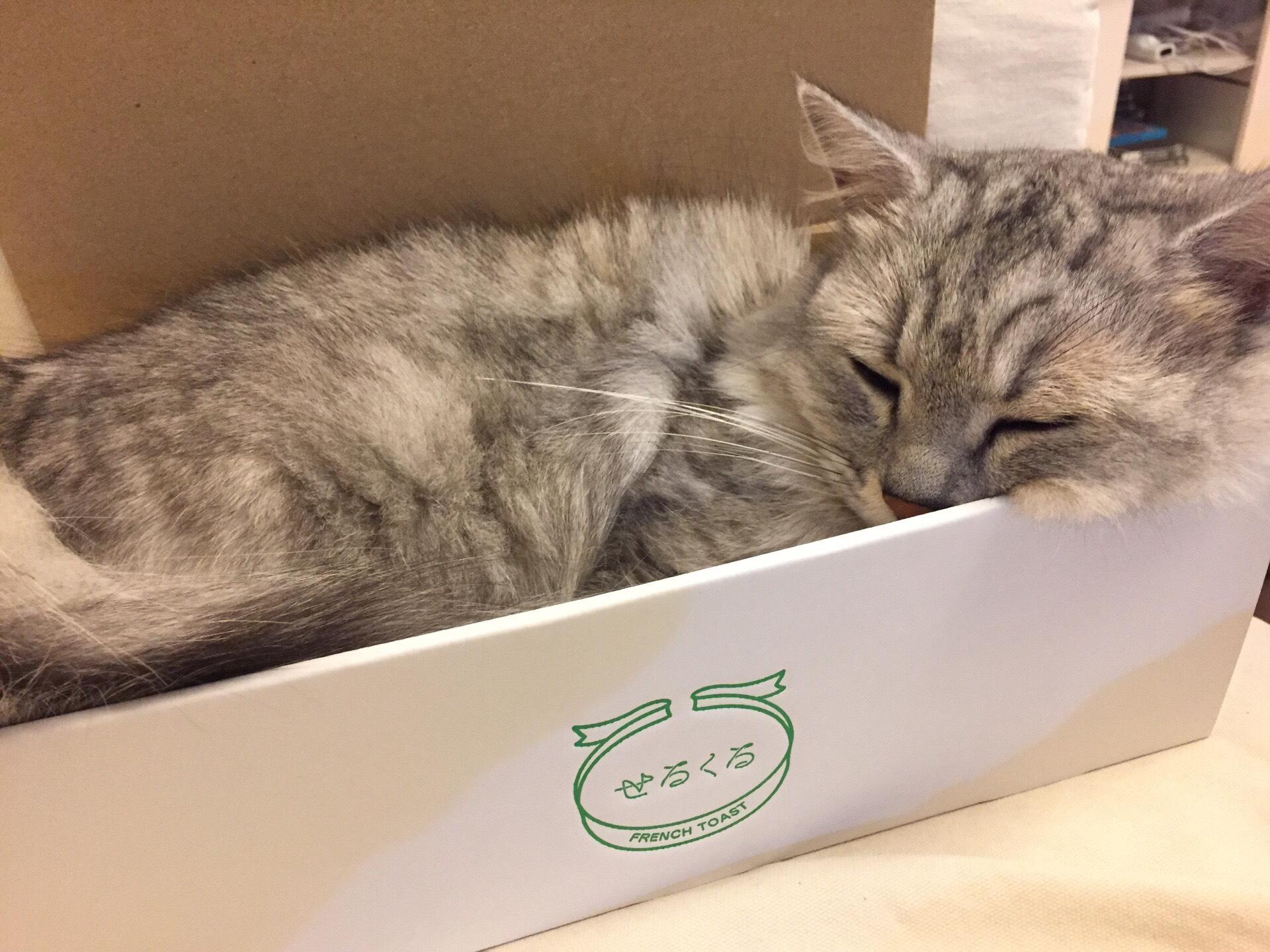 ギフトボックス フレンチトースト 猫入り